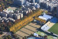 東京都 港区神宮外苑の銀杏並木