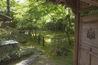 京都府 高桐院(大徳寺塔頭) 古井戸と七五桐の透かし彫り