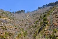 高知県 杉の伐採跡斜面 植林