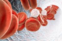 血管内の赤血球と白血球