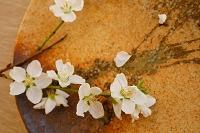 梨の花と和皿