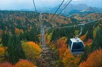 紅葉の森吉山