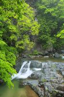 山梨県 女滝と新緑