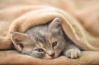 お昼寝子猫