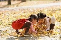 イチョウの落ち葉を拾う女の子たち