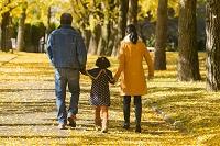 紅葉の銀杏並木の日本人家族