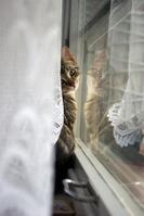 窓際に座る子猫
