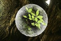 水の球体と若葉