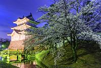 埼玉県 忍城の桜ライトアップ