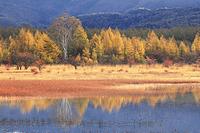 栃木県 朝の小田代ヶ原の幻の池と貴婦人
