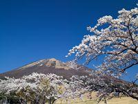 鳥取県 サクラと大山