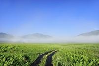 群馬県 尾瀬 中田代の木道から望む至仏山