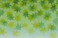 若葉 緑色