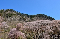 奈良県 曽爾村 屏風岩