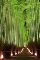 京都府 嵐山花灯路 竹林の小径のライトアップ