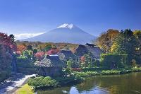 山梨県 榛の木林の紅葉と富士山