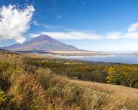 山中湖パノラマ台から見る富士山と雲海に覆われた山中湖とススキ