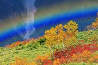 長野県 紅葉と虹 八方尾根