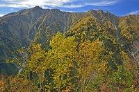 長野県 爺ケ岳中腹から鳴沢岳(左)と岩小屋沢岳(右)