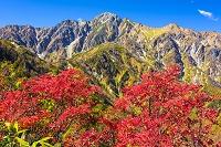 長野県 紅葉と五竜岳