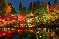 京都府 永観堂のライトアップ