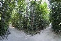 備瀬のふく木並木