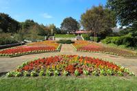埼玉県 智光山公園の都市緑化植物園