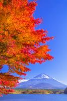 山梨県 富士山と精進湖の紅葉
