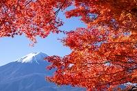 山梨県 紅葉と初冠雪の富士山