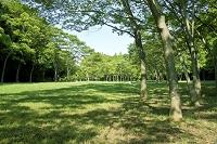 緑の公園 和泉市 大阪府