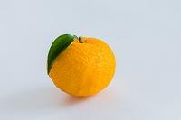 果実 葉の付いたユズ