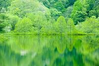 新緑の秋元湖