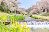 福島県 観音寺川