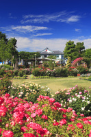 長野県 中野市 一本木公園のバラ園と一本木公園展示館