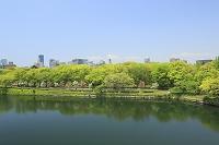 大阪府 新緑の大阪城公園