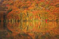 青森県 蔦沼 朝の紅葉の水鏡