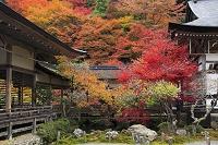 京都府 常照皇寺の紅葉