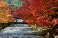 京都府 二尊院・紅葉の馬場(参道)