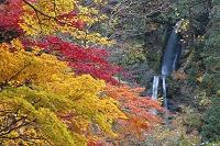 秋田県 仙北市 抱返り渓谷の回顧の滝