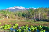 長野県 乗鞍高原 どじょう池と乗鞍岳