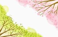 桜と新緑 春イメージ