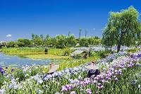 千葉県 水郷佐原水生植物園