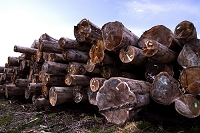 輸入木材の貯木場