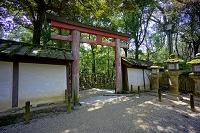 奈良県 春日大社の藤鳥居