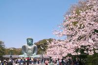 神奈川県 鎌倉市 長谷の大仏