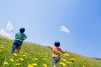 野花の咲く丘で虫を追う兄弟の後ろ姿