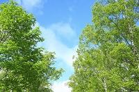 長野県 乗鞍高原 新緑の樹林と青空