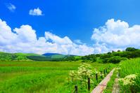 長野県 八島湿原と木道