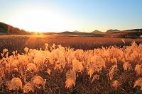 奈良県 曽爾高原・夕陽とススキ