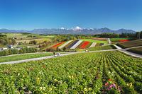 北海道 四季彩の丘と十勝岳連峰の秋